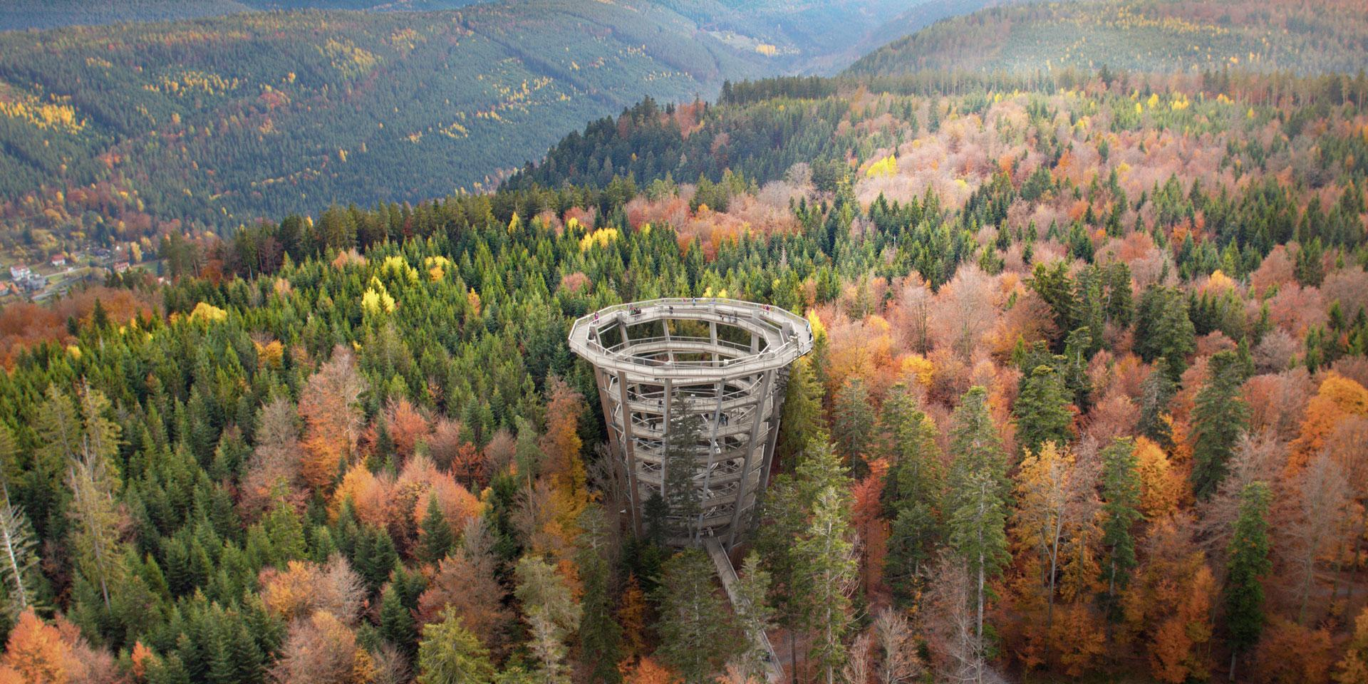 The observation tower at the Treetop Walk Black Forest