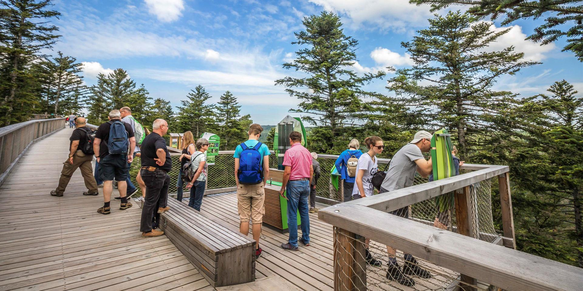 Guided tours of the Treetop Walk