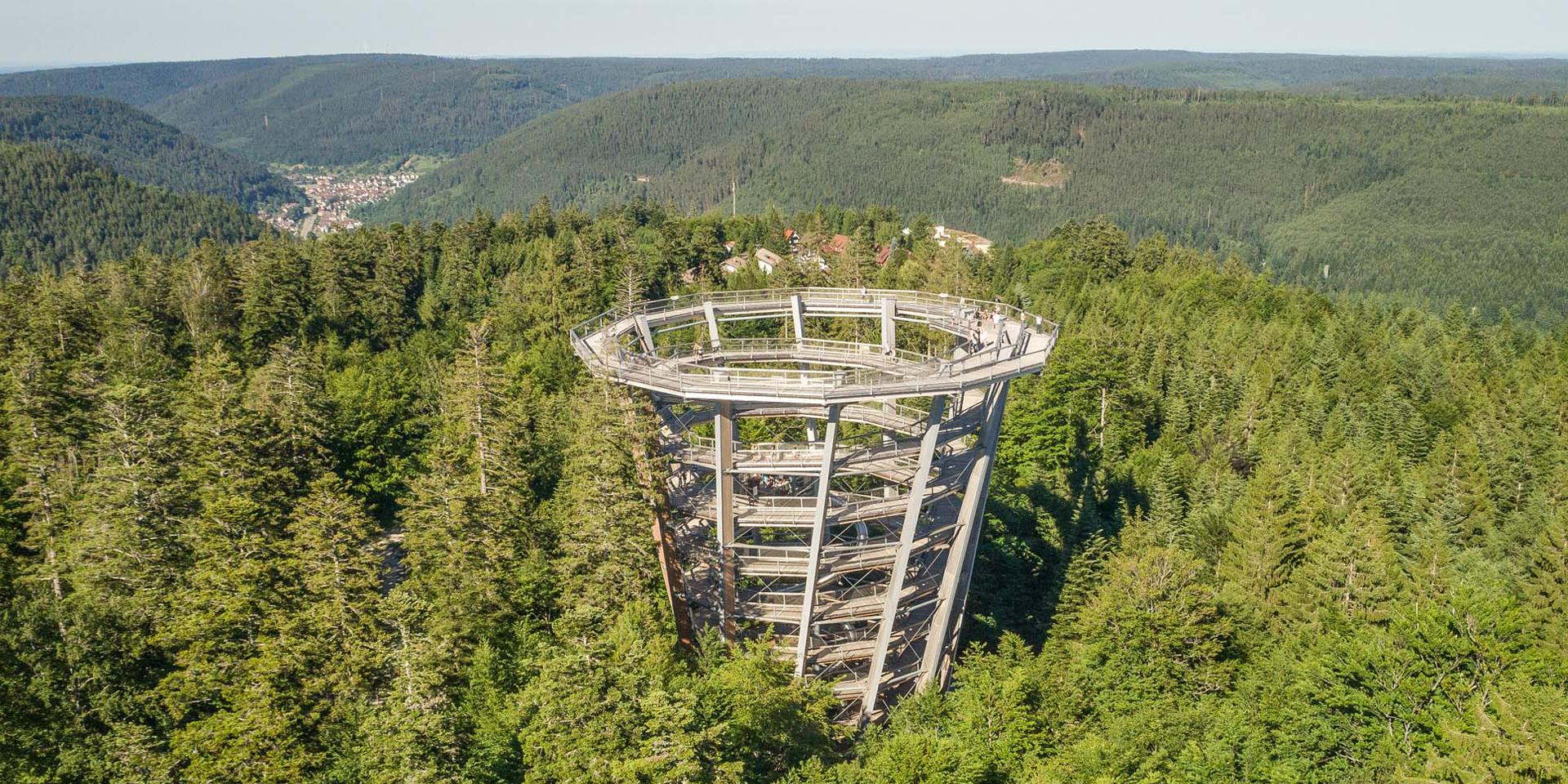 The Treetop Walk Black Forest